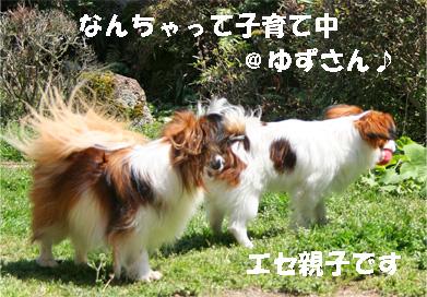 yuzusora080401-2.jpg