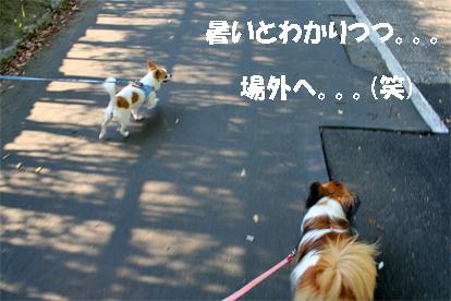 yuzutomarinchan1.jpg