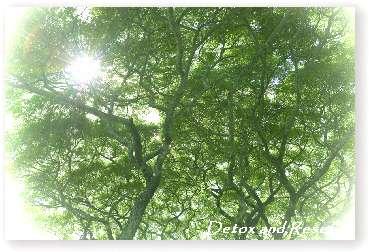 treesun1