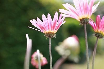 july_flower4