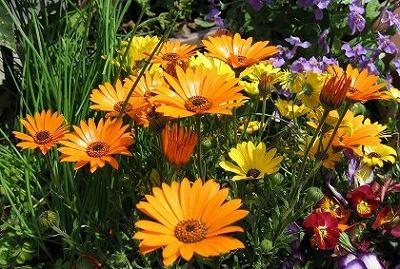 July_flower5