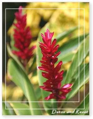 flowerMarch