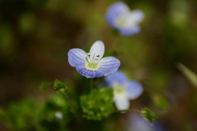 July_Flower6