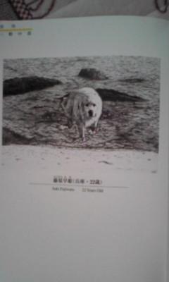 犬の絵コンクール