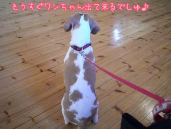 犬が出てくる気配には敏感のコピー