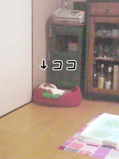 080214_2003~01