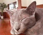 ネコ寝入り