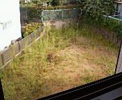 裏庭には二羽ニワトリがいない