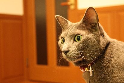激写される灰猫