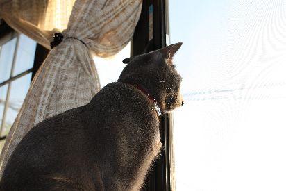 眺めるネコ