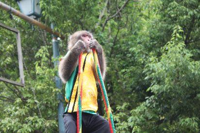 竹馬に興じるお猿さん