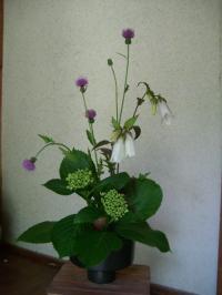 路地の花で