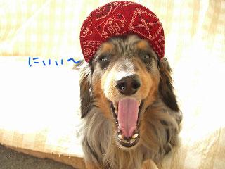 笑う犬ー5