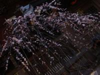 梅 湯島天神② 2009.02.14