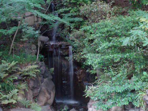 古河庭園09 日本庭園01 2009.05.21