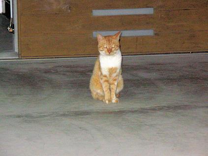屋久島猫01