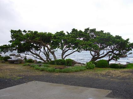 屋久島0054