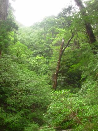 屋久島0027