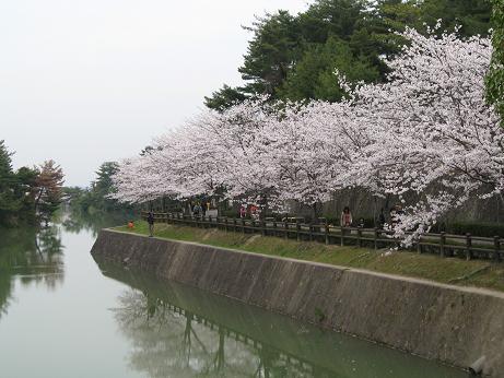 白水桜01