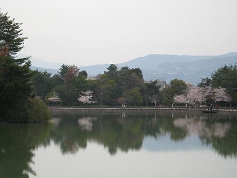 白水桜02