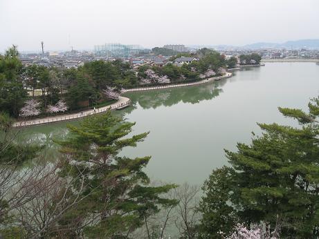 白水桜03