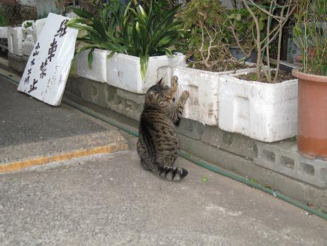 壱岐マラソン2009 21