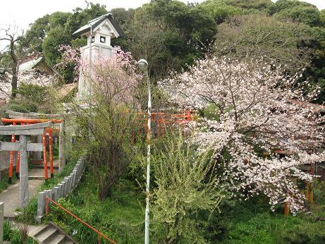 西公園の桜07