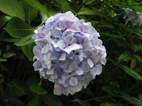 6月の花 03