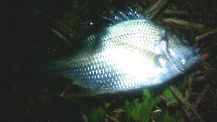 20090816 003
