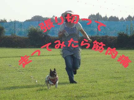 2009実家の夏のコピー