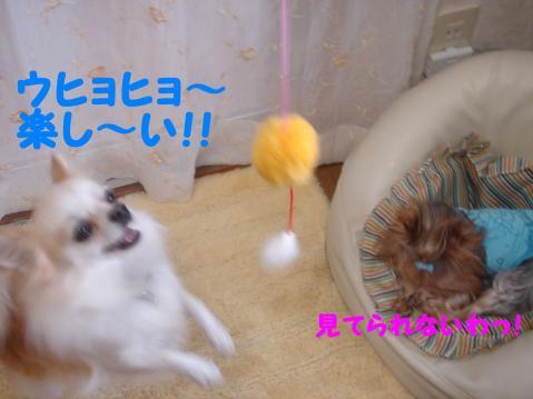 20071101091023.jpg