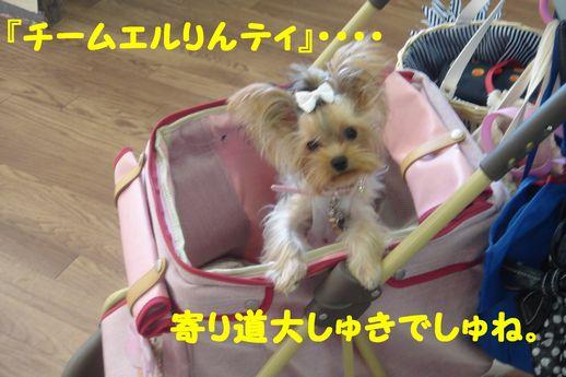 恋の浦17.5
