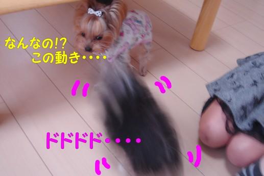 モコちゃん4