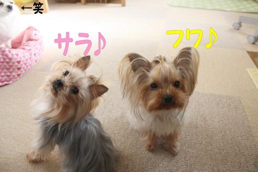 3シャン2