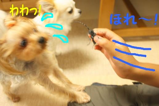 カミキリ0・5