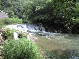 香川県 ドッグラン 渓谷