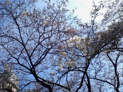 azabu_hanami_002.jpg
