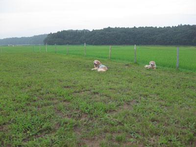 2009-08-01c.jpg
