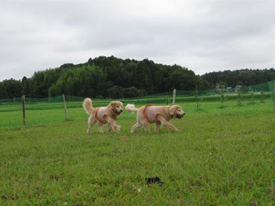 2009-08-04d.jpg