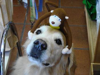 dog-cafe-b16-b.jpg