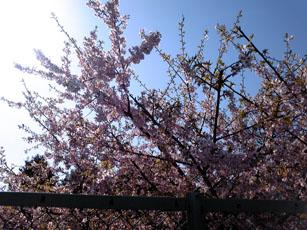 エトワール フラワーアートクリエイター 狭山 鶴ヶ島 恵比寿 銀座 若葉ウォーク 桜