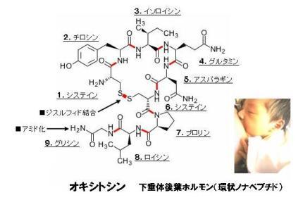 オキシトシン-1