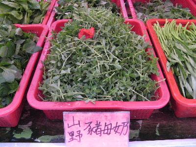 台湾の野菜3