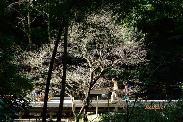 miyamae090307-004.jpg