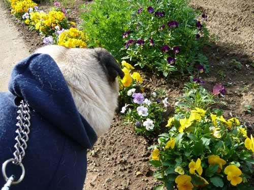 朝のお散歩 花と翼 2