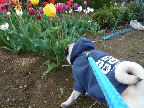 2008年4月21日 朝のお散歩 花と翼 6