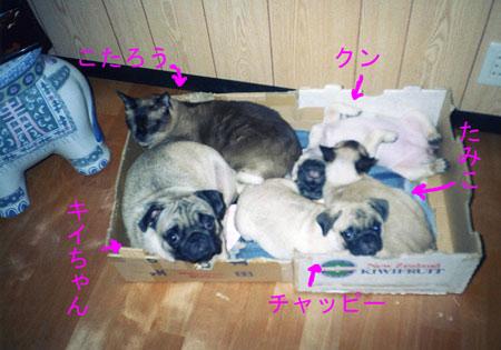 子供たちと猫たち