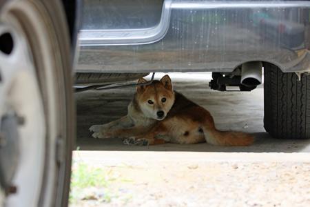 車の下に隠れてしまう