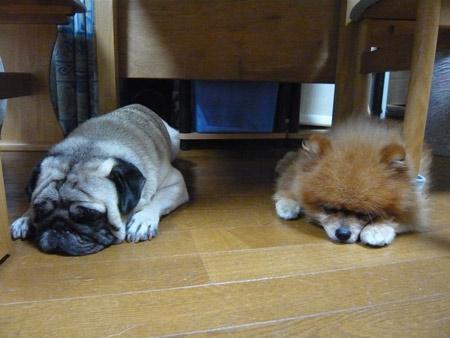 テーブルの下でも一緒