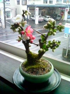 自宅で花見3